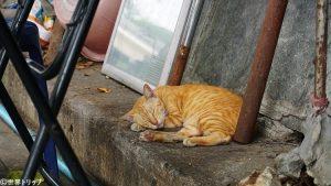 タイ・バンコクの猫