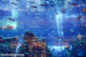 ドバイ水族館(Dubai Aquarium)