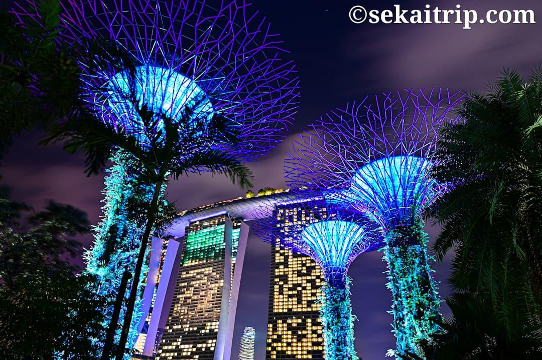シンガポールのガーデンズ・バイ・ザ・ベイ(Gardens by the Bay)の夜景