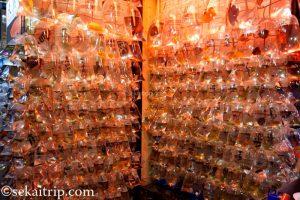 香港の金魚街(Goldfish Market)