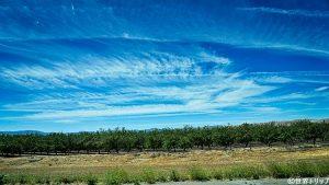 カリフォルニアのオレンジ畑
