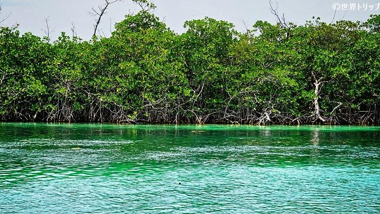カンクンのラグーン(Lagoon)