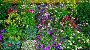 マリー・アントワネットの離宮にある庭園の花々