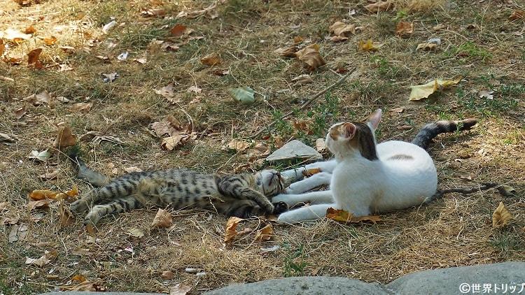 新市街で見かけた猫の親子