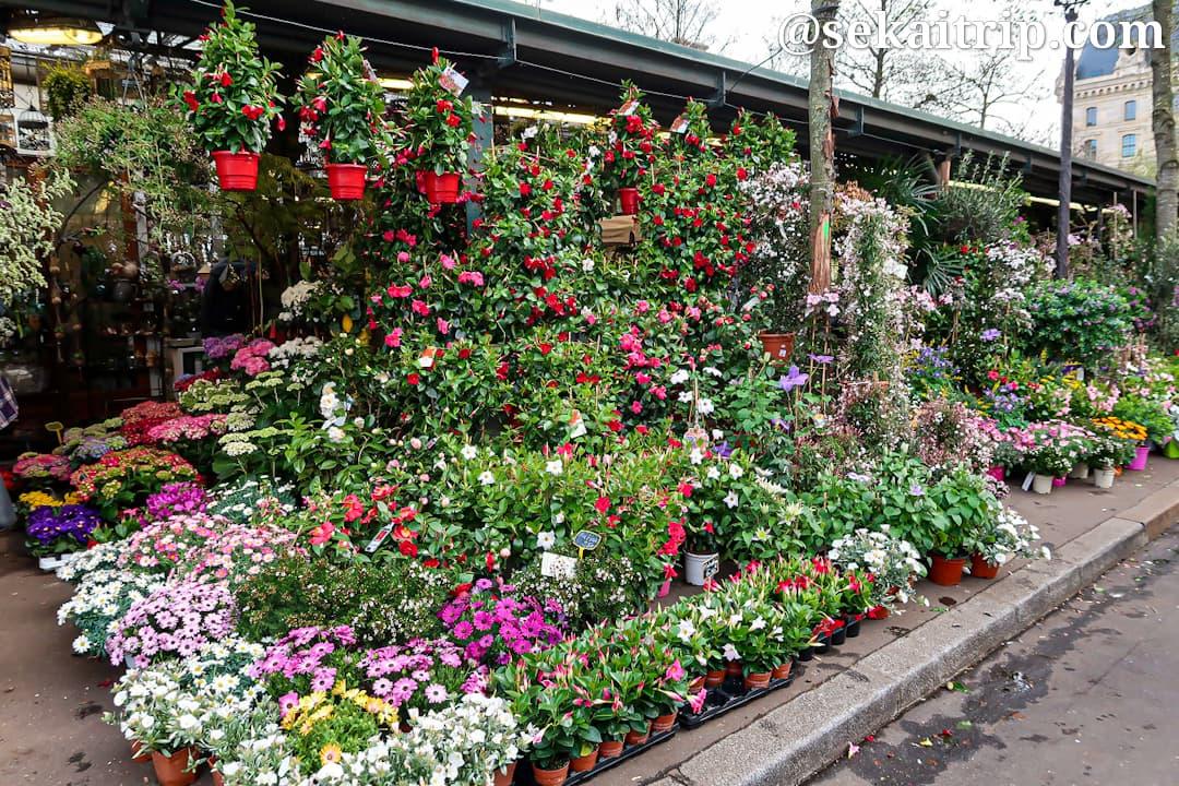 エリザベス二世花市場