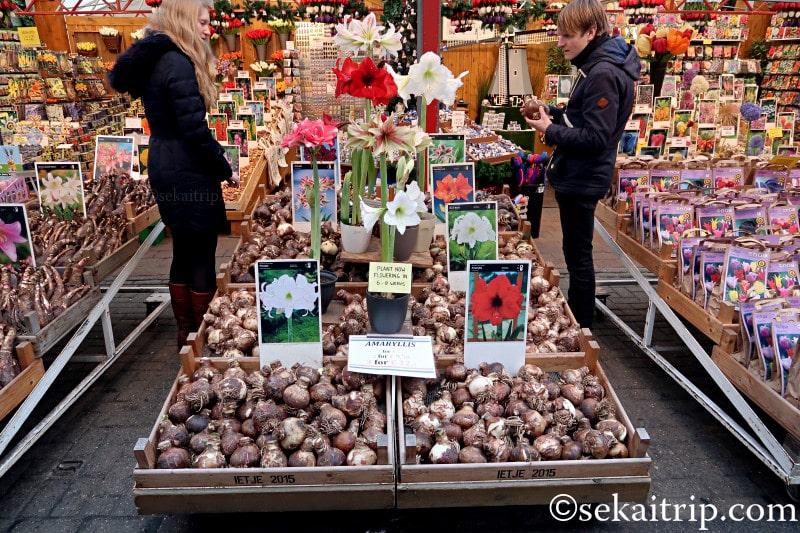 アムステルダムの花市場で売られていた球根等