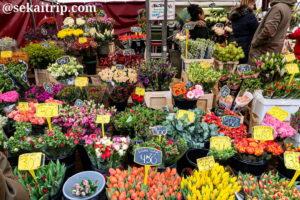 ダッペル市場(Dappermarkt)の花屋さん