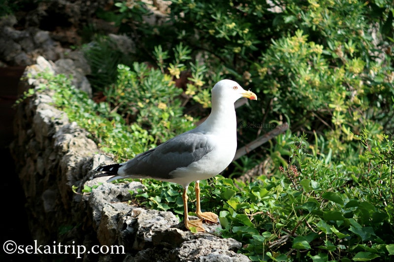 サン・マルタン庭園(Jardins de Saint-Martin)で見かけた海鳥