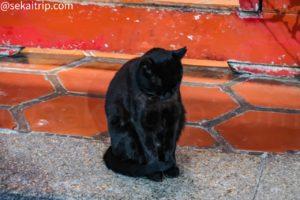 台北三大廟の龍山寺でうとうとしていた猫