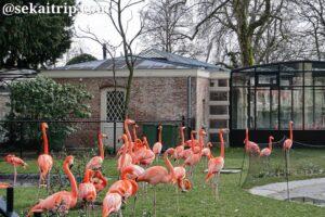 アントワープ動物園(ZOO Antwerpen)のフラミンゴ