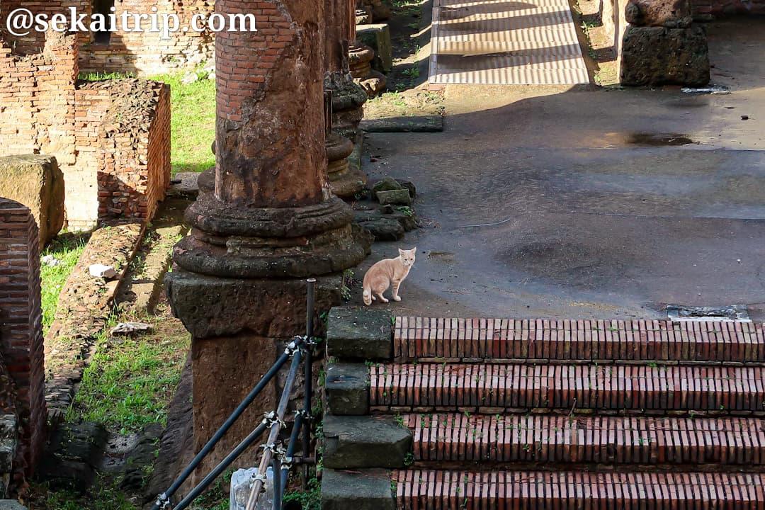 トッレ・アルジェンティーナ広場で見かけた猫