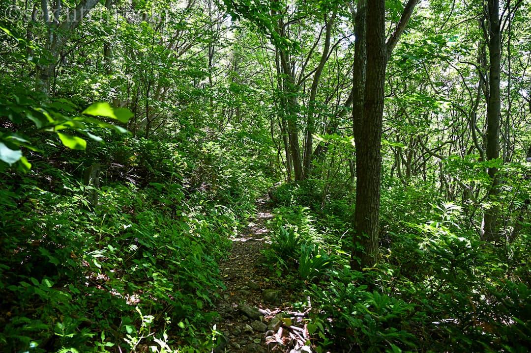 尻場山の出口に向かう道(草との距離が近くなる)