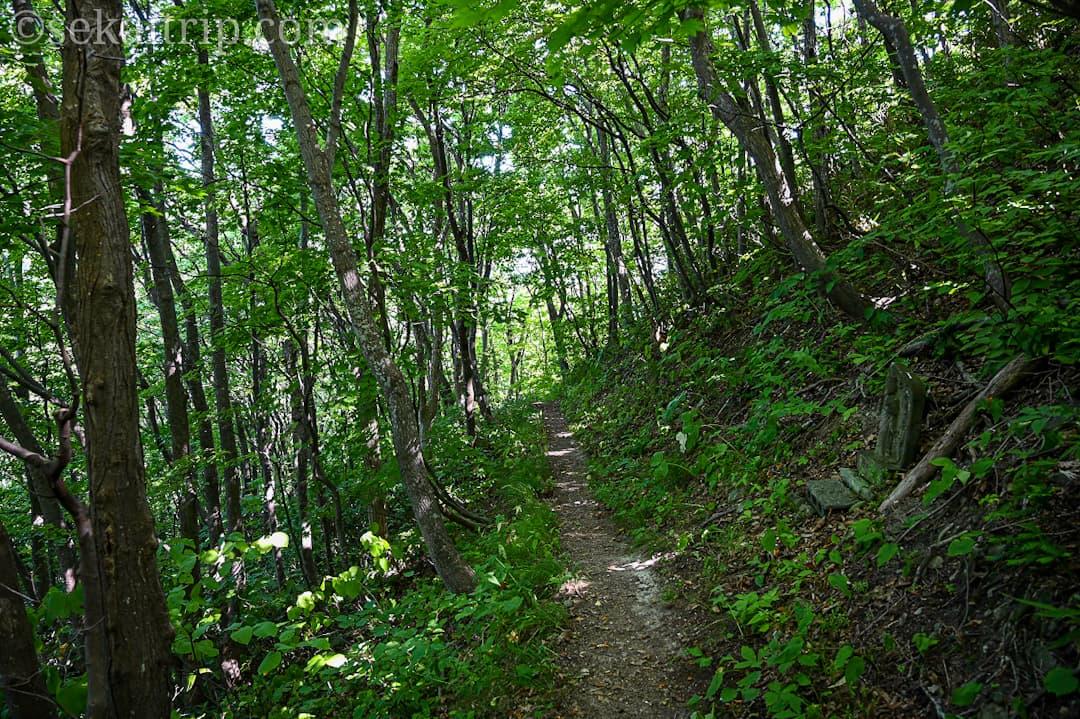 尻場山の登山道(分岐点後の登山道)