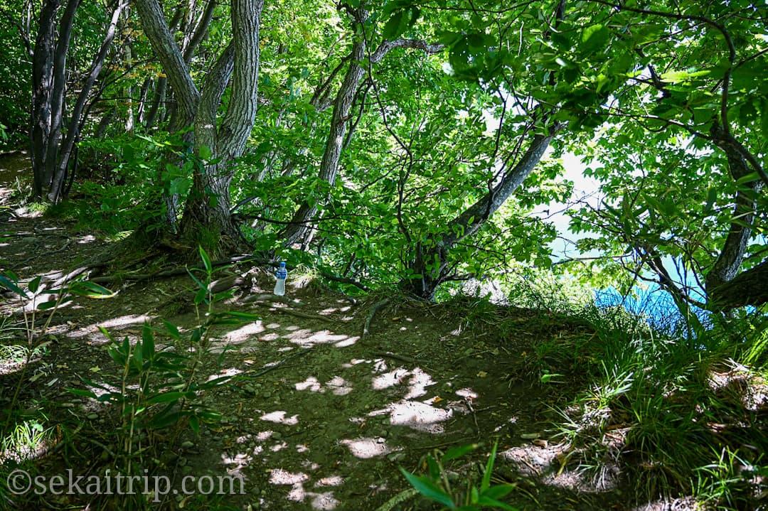 尻場山の登山道(積丹ブルーが見られる場所)