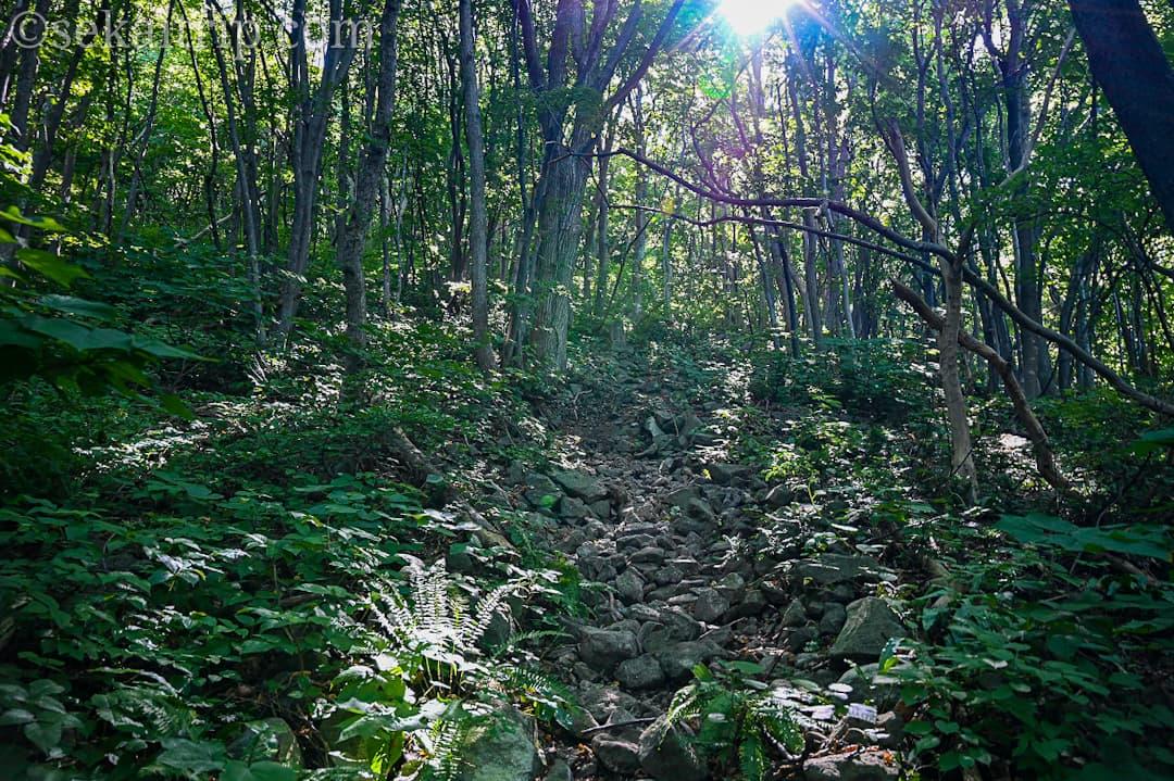 尻場山の登山道(入口付近)